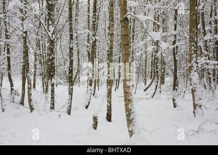 Wald im Schnee - Stockfoto