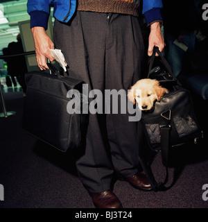 Ein männlicher Passagier aus dem Abfall nach unten mit einem Laptop-Computer in einer Hand und ein Retriever Welpe - Stockfoto