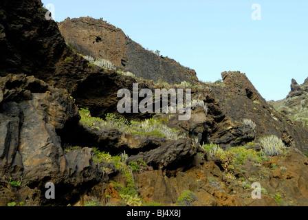Spanien, Kanarische Inseln, Teneriffa Punta de Teno, rockt mit Kakteen - Stockfoto