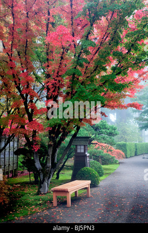 japanischer ahornbaum stockfoto bild 310621552 alamy. Black Bedroom Furniture Sets. Home Design Ideas