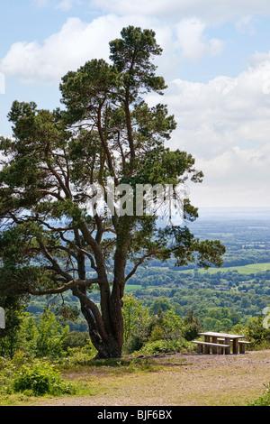 Picknick-Tisch unter einem großen Baum mit Blick auf die North und South Downs vom Gipfel des Leith Hill, Surrey, - Stockfoto