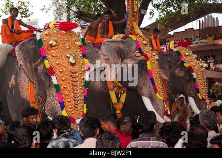 Indien, Kerala, Koorkancherry Sree Maheswaras Tempel, Thaipooya Mahotsavam Festival, drei geschmückten Tempel Elefanten - Stockfoto