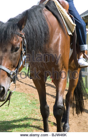 Frau auf einem Pferd - Stockfoto