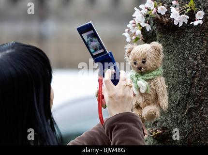 Eine Frau benutzt ihr Handy nehmen Sie ein Foto von ihr Teddy Bär unter einem Kirschbaum in Tokio - Stockfoto