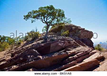 Baum wächst aus großen Steinen oben auf einem Berg. - Stockfoto