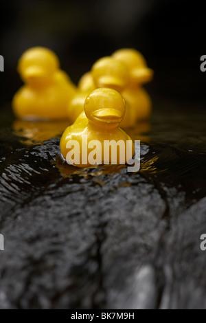 gelbe Plastikspielzeug Enten auf einem schnell fließenden Fluss im Vereinigten Königreich - Stockfoto