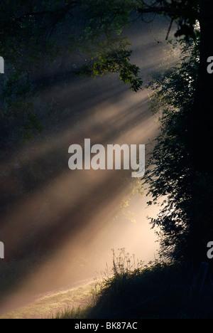 Lichtvorhang im Herbst, nebligen Morgen Stimmung auf einem unbefestigten Pfad am Rande der breitenburger Moor, Schleswig - Stockfoto