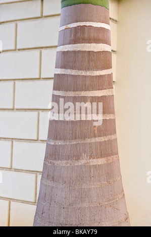 Stamm der Palme mit horizontalen Linien Wand im Backgroud Rodney Bay St. Lucia Windward-Inseln West Indies Karibik - Stockfoto