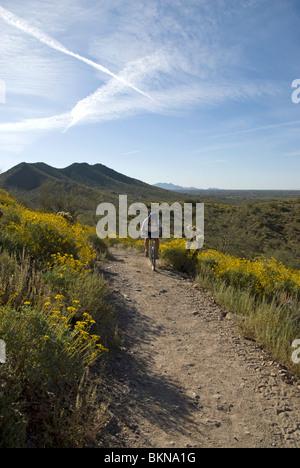 Ein Mountainbiker auf eine Spur im Cave Creek Regional Park, Cave Creek in der Nähe von Phoenix, Arizona, USA - Stockfoto