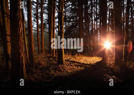 Helles Licht im Wald - Stockfoto