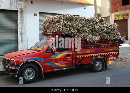 Pickup-Truck gefüllt mit Knoblauch in Hurghada, Ägypten - Stockfoto