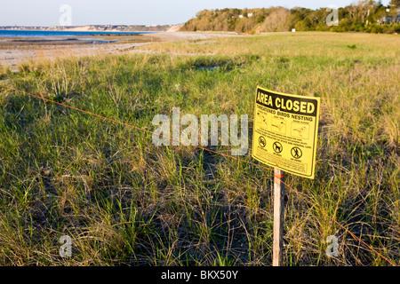 Tern und Rohrleitungen Regenpfeifer Verschachtelung Bereich bei der Verlagerung viel Preserve in Plymouth, Massachusetts. - Stockfoto