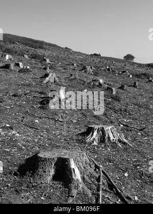 Baumstümpfe auf freiem Feld