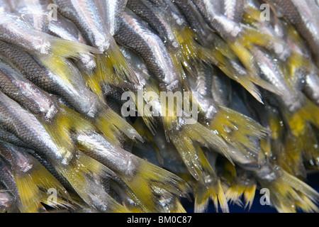 Eine Nahaufnahme von Fischschwänzen auf einem Markt in Arequipa, Peru - Stockfoto