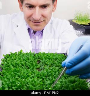 Wissenschaftler forschen auf Pflanzen in einem Labor - Stockfoto