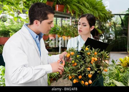 Wissenschaftler untersuchen eine Pflanze in einem Gewächshaus - Stockfoto