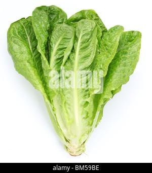 Salat auf einem weißen Hintergrund