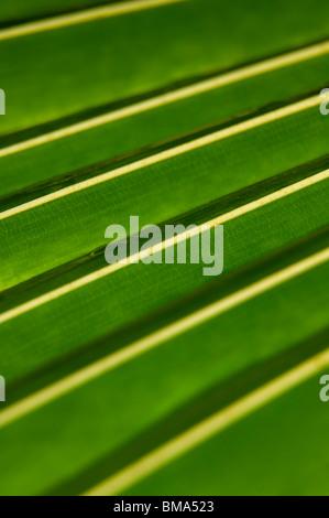 Detail von einem grünen tropischen Blatt im Regenwald - Stockfoto
