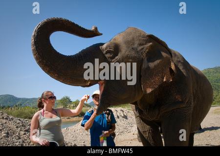 THAILAND, nördlich von CHIANG MAI: Lek es Elefanten Farm für gerettete Elefanten, ein Ort für alternative Elefant - Stockfoto