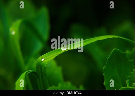 Wassertropfen auf einem grünen Rasen - Stockfoto