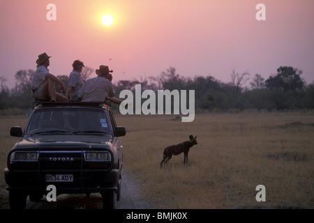 Botswana, Moremi Game Reserve, Touristen auf Safari sehen Sie Afrikanischer Wildhund (LYKAON Pictus) spielen in - Stockfoto