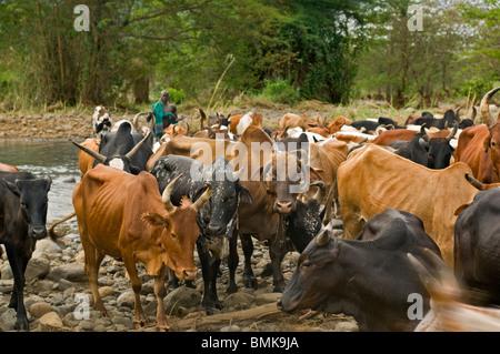 Surma Leute Stockfotos und -bilder Kaufen - Alamy