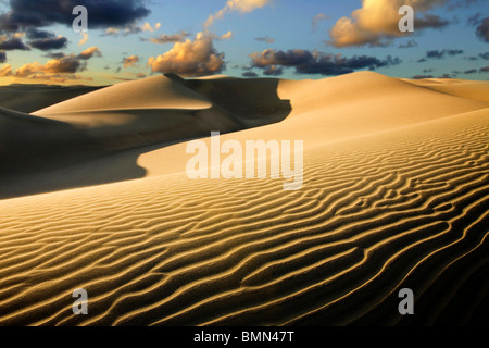 Sanddünen in der Wüste im Morgengrauen. Fotografieren in den Dünen von Maspalomas auf Gran Canaria. - Stockfoto