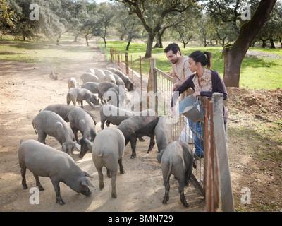 Mann und Frau auf Bauernhof Schweine füttern - Stockfoto