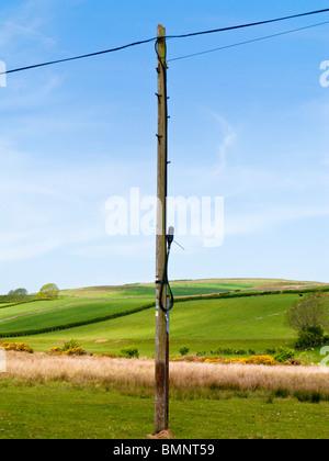 Telegrafenmasten und Drähte, Großbritannien Stockfoto, Bild ...
