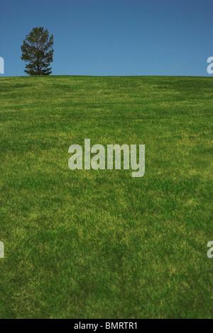 Alberta, Kanada; Ein einsamer Baum In einem Feld - Stockfoto