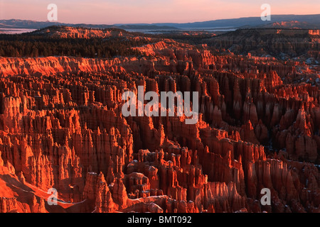 Utah, Vereinigte Staaten von Amerika; Sandstein Hoodoos Bryce Amphitheater angesehen im Bryce-Canyon-Nationalpark - Stockfoto