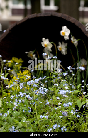 Blumen, Hobbys, Garten, grün, Natur, - Stockfoto