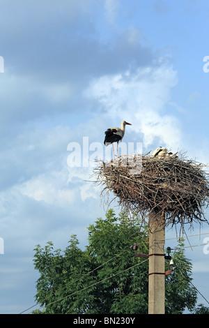 Storch auf dem Nest, Subbotov, Cherkasy Oblast, Ukraine - Stockfoto