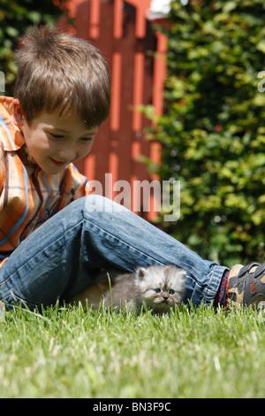 Hauskatze, Hauskatze, Perser (Felis Silvestris F. Catus), lächelnde junge saß auf einer Wiese mit einem 4 Wochen - Stockfoto