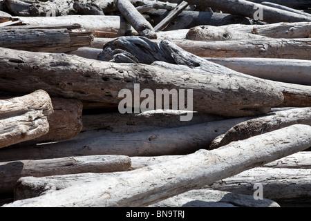Treibholz am Strand, Nahaufnahme - Stockfoto