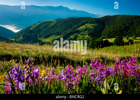 Wildblumen auf dem Hügel von Forca Canapine in den Monti Sibillini Nationalpark, Umbrien Italien - Stockfoto