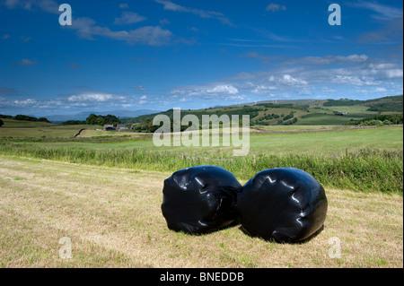 Wickeln Sie große Ballen von Silage Wraped aus schwarzem Kunststoff - Stockfoto