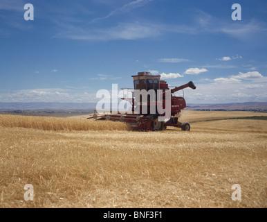 Kombinieren Sie die Ernte von Gerste in einem Feld, Walla Walla, Washington State, USA - Stockfoto