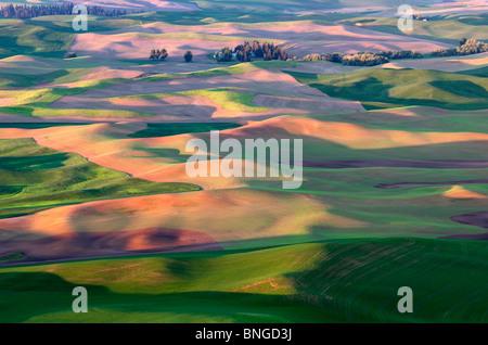 Neuer Frühling Weizen Wachstum. Die Palouse, in der Nähe von Colfax, Washington. - Stockfoto