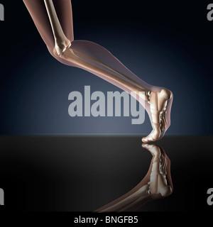 Röntgenblick ein menschliches Bein in Position ausgeführt - Stockfoto