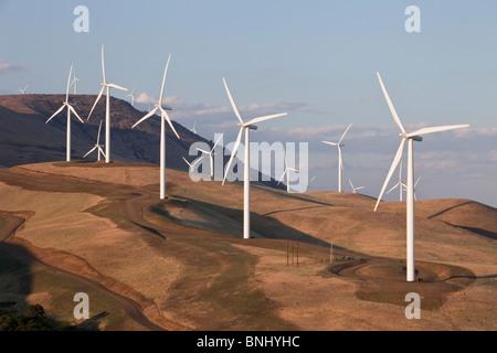 Windpark, einheimische Flora, - Stockfoto