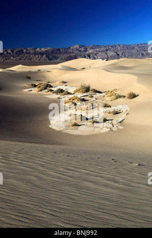 Mesquite Flats Sanddünen Sanddünen Death Valley Nationalpark Kalifornien USA Nordamerika Berg Berge Sträucher Dune - Stockfoto