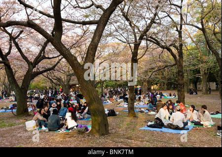 Jugendliche, die Picknicks im Yoyogi-Park, Shibuya, Tokyo, Japan - Stockfoto