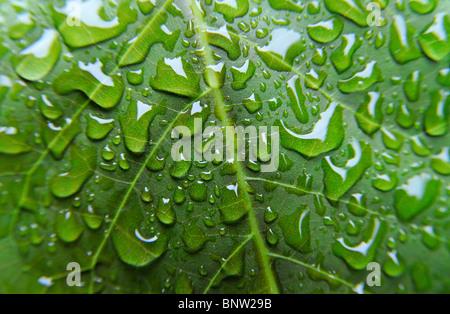 Nahaufnahme von Regen Tropfen auf einem grünen Blatt - Stockfoto