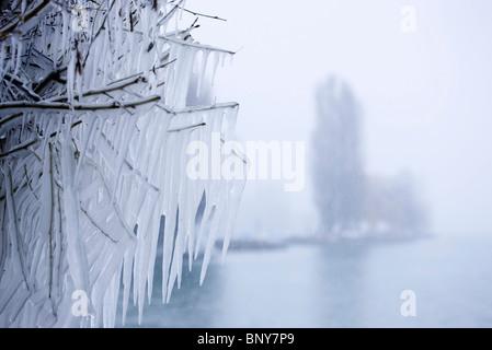 Filialen in Eiszapfen bedeckt - Stockfoto