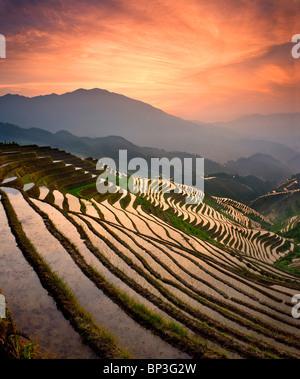 Drachen-Backbone-Reis-Terrassen in der Nähe von Yao Dorf Dazhai, Provinz Guangxi, China - Stockfoto