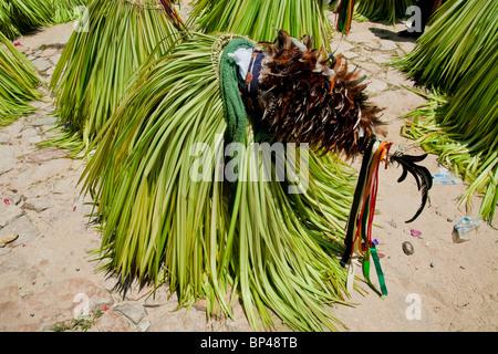 Die Cucambas-Tänzer Knien in die religiöse Prozession in Atanquez, Sierra Nevada, Kolumbien. - Stockfoto