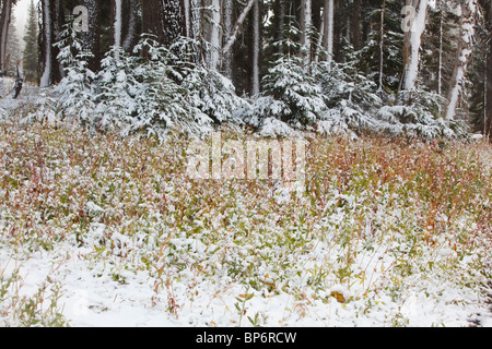 Oregon, Vereinigte Staaten von Amerika; Erste Schnee fallen auf Herbstfarben am Mount Hood In Oregon Cascades - Stockfoto