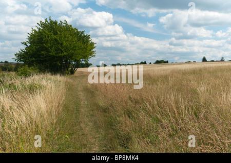 Heu-Feld und Bäume im Sommer. - Stockfoto
