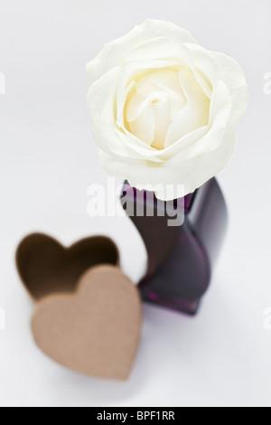 Weisse rose in lila Vase und Herz geformten Pappschachtel - Stockfoto